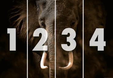 Vlies Fototapete Elefant Elfenbein 368x254cm – Bild 4