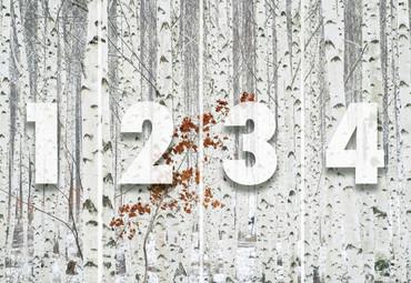 Wall Mural White Birch Forest Non-Woven 368x254cm – Bild 4