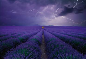 Vlies Fototapete Lavendelfeld 368x254cm – Bild 1