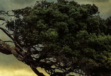 Vlies Fototapete Scary Vintage Baum 368x254cm – Bild 3