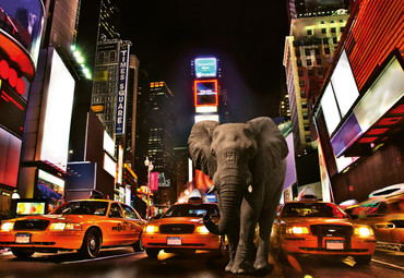 Vlies Fototapete Elefant in New York 368x254cm – Bild 1