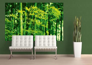 Giant Art Bamboo in Spring – Bild 1