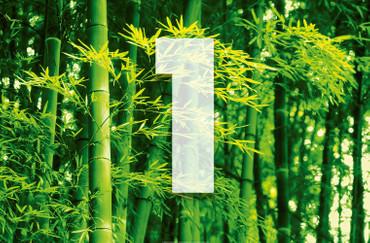 XXL Poster Bambus Grün – Bild 3