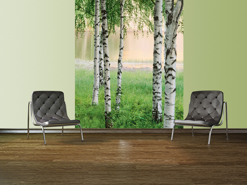 fototapete birkenwald vor see fototapeten. Black Bedroom Furniture Sets. Home Design Ideas
