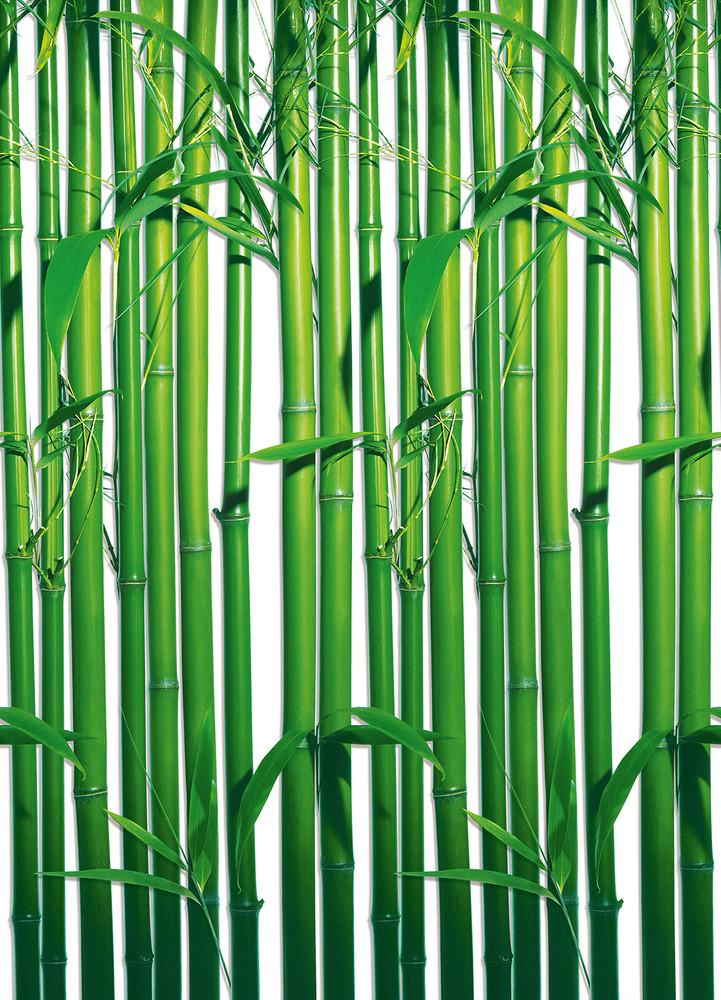 fototapete bambus fototapeten. Black Bedroom Furniture Sets. Home Design Ideas