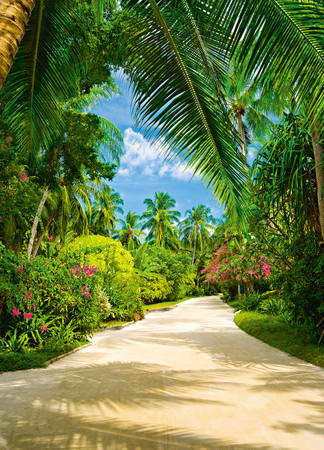 Wall Mural Tropical Pathway – Bild 2