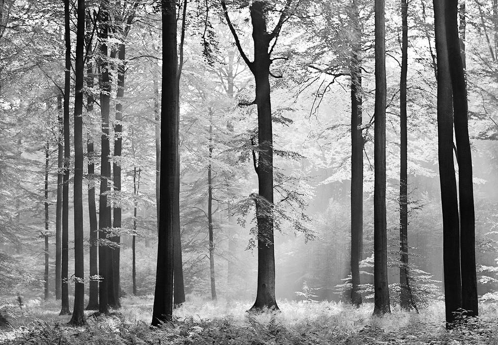 Fototapete Wald Schwarz Wei 223 Ideal Decor