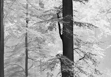 Fototapete Wald Schwarz-weiß – Bild 3