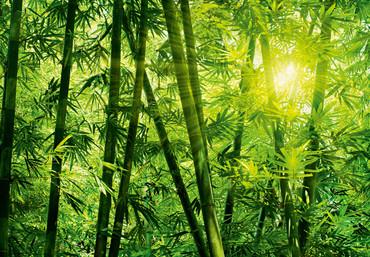 Wall Mural Bamboo Forest – Bild 3