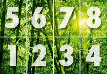 Fototapete Bambus Wald Grün – Bild 2