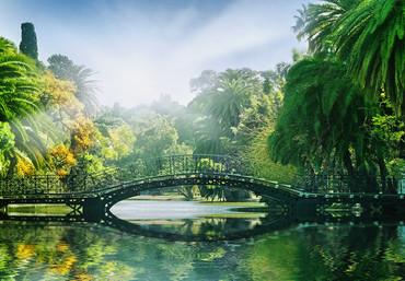 Fototapete Brücke über See im Wald im Sonnenschein