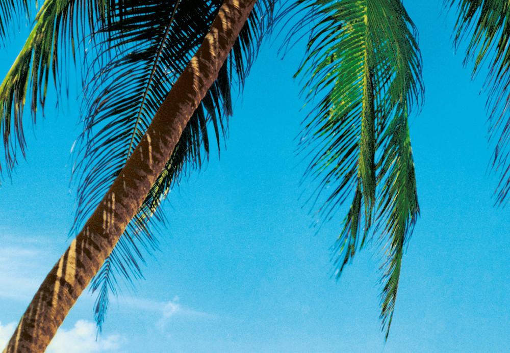 fototapete strand meer palmen und insel papier fototapeten xxl papier fototapeten. Black Bedroom Furniture Sets. Home Design Ideas