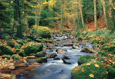 Wall Mural Forest Stream – Bild 2