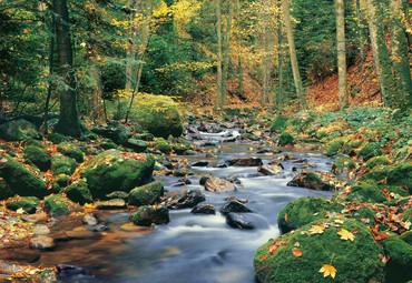 Fototapete Wald mit Fluss im Herbst – Bild 2