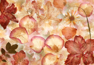 Non-Woven Wall Mural Dried Flowers – Bild 2