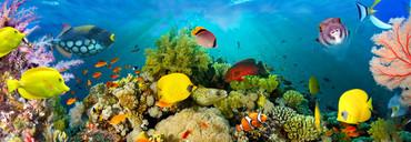 Non-Woven Wall Mural Sea Corals – Bild 2
