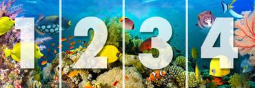 Non-Woven Wall Mural Sea Corals – Bild 3
