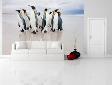 Fototapete Tiere Pinguine – Bild 1