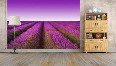 Fototapete Lavendelfeld