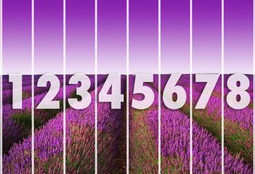 Fototapete Lavendelfeld – Bild 3