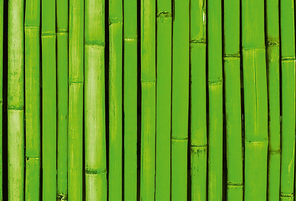 fototapete bambus wand gr n vlies fototapeten wiizi fototapeten. Black Bedroom Furniture Sets. Home Design Ideas