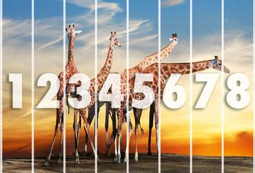 Fototapete Giraffen – Bild 3
