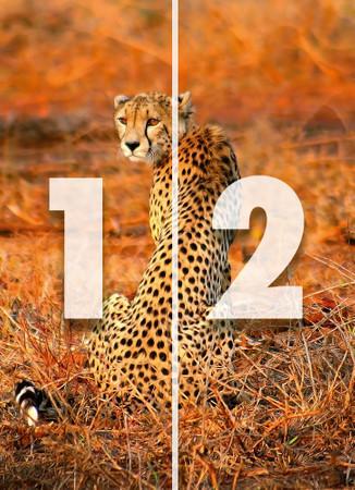 Papier Fototapete Leopard Safari 184x254cm – Bild 4