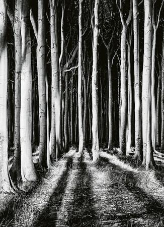 Papier Fototapete Geisterwald 184x254cm