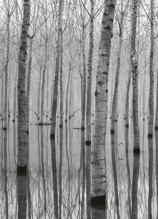 Papier Fototapete Birkenwald im Wasser 184x254cm
