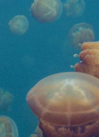Papier Fototapete Quallen Unterwasser Meer 184x254cm – Bild 3