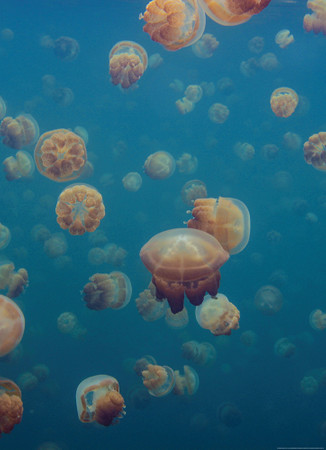 Papier Fototapete Quallen Unterwasser Meer 184x254cm