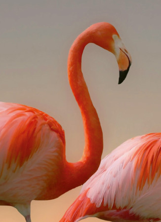 Papier Fototapete Flamingos 184x254cm – Bild 3