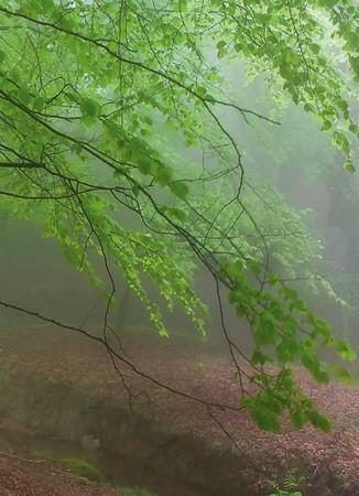 Vlies Fototapete Nebeliger Wald 184x254cm – Bild 2