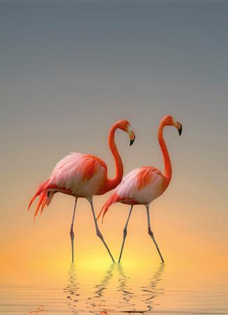 Vlies Fototapete Flamingos 184x254cm – Bild 1