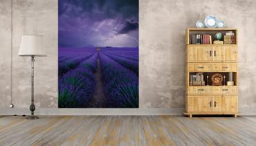 Vlies Fototapete Lavendelfeld 184x254cm – Bild 2