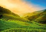 Papier Fototapete Terassenförmig angelegtes Reisfeld in Vietnam 368x254cm 001