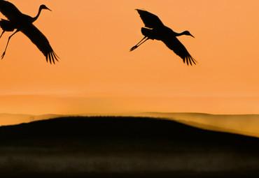 Papier Fototapete Vögel bei Sonnenuntergang 368x254cm – Bild 3
