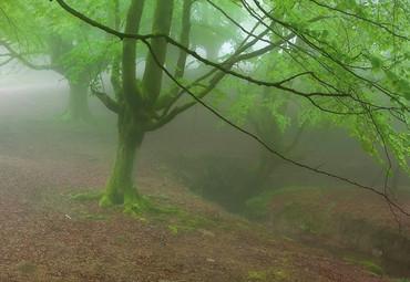 Papier Fototapete Nebeliger Wald 368x254cm – Bild 3