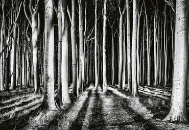 Papier Fototapete Geisterwald 368x254cm – Bild 1