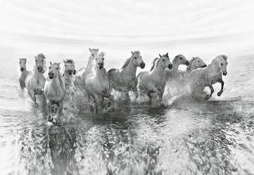Papier Fototapete Weiße Pferde 368x254cm – Bild 1