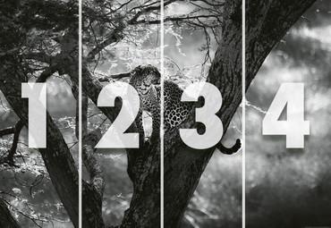 Papier Fototapete Leopard auf Baum 368x254cm – Bild 4