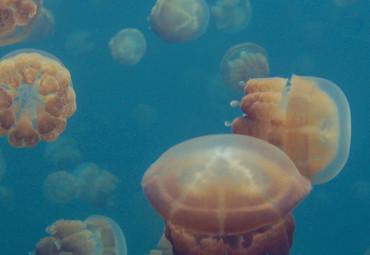 Papier Fototapete Quallen Unterwasser Meer 368x254cm – Bild 3