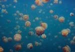 Papier Fototapete Quallen Unterwasser Meer 368x254cm 001