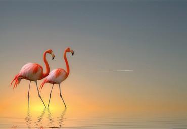 Papier Fototapete Flamingos 368x254cm – Bild 1
