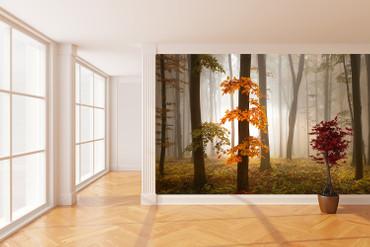 Papier Fototapete Nebeliger Wald im Herbst 368x254cm – Bild 2