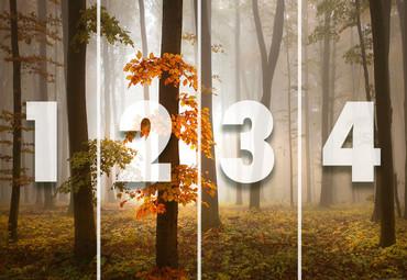 Papier Fototapete Nebeliger Wald im Herbst 368x254cm – Bild 4