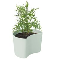 RIG TIG by stelton YOUR TREE Blumentopf green mit Kiefernsamen