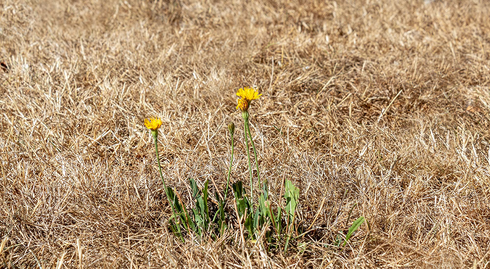 Trockener Rasen? Kriegen wir wieder hin.