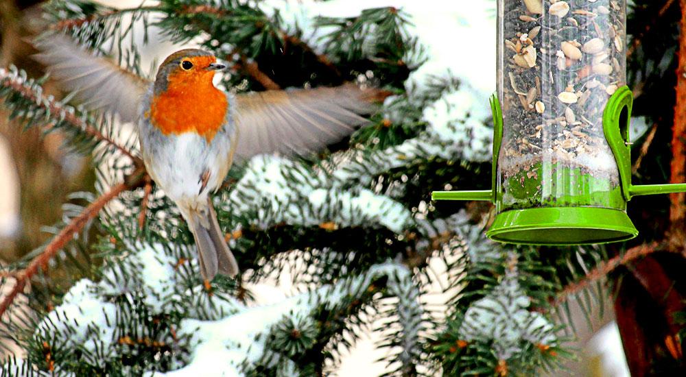 Wildvögel ganzjährig füttern – jetzt Futter und Futtersilos bestellen!