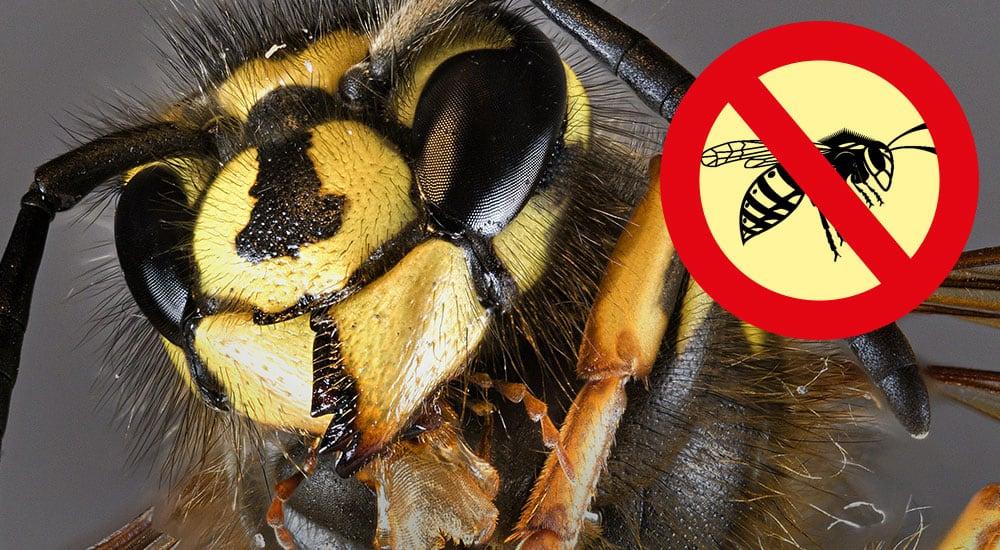 Bssssssst – erfolgreich Wespen beseitigen.